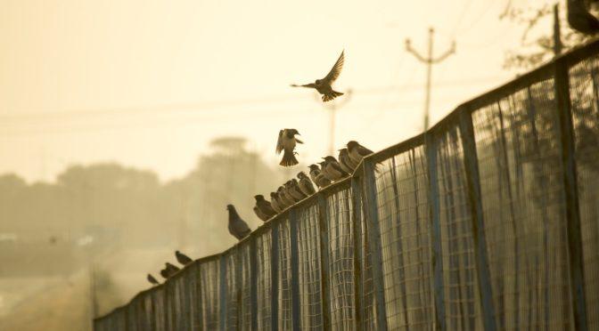 era-fence-sitting-corporation